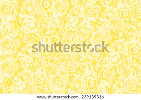 yellow roses background , natural texture of love  - stock photo
