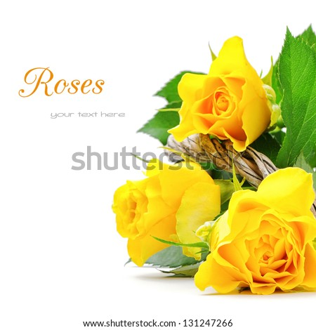Yellow roses isolated over white - stock photo