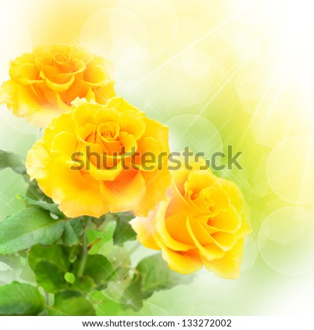 Yellow roses on colorful background - stock photo