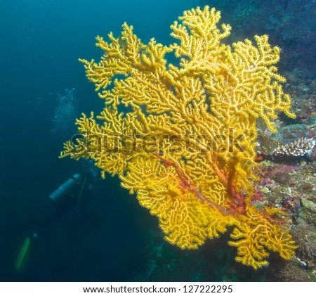 Yellow sea fan coral fish cebu stock photo 100 legal protection yellow sea fan coral and fish in cebu philippines publicscrutiny Images