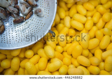 Yellow Silkworms nest and larva silk in basket , the brewing process, bringing silks to silk, silk fabric.
