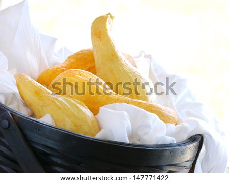 Yellow Squash in Basket with Copy Space - stock photo