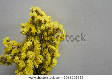 Yellow statice flower on white background stock photo royalty free yellow statice flower on white background statice is grown as both a cut flower and mightylinksfo