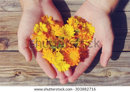 Yellow summer flowers in the form of heart in male hands against a wooden board in vintage tones. Calendula flowers in the form of heart close up. Festive love background