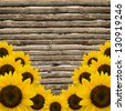 yellow sunflowers on background of old fence. - stock photo