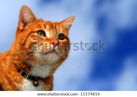 Yellow tabby cat looking for prey in winter - stock photo