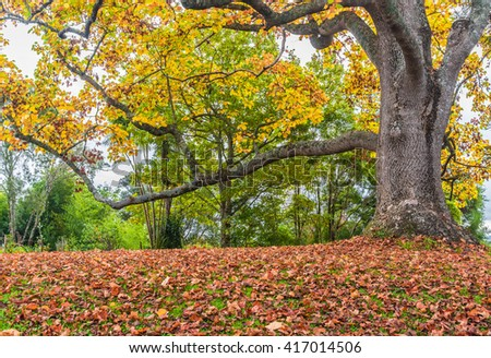 Yellow tree and fallen leaves autumn landscape