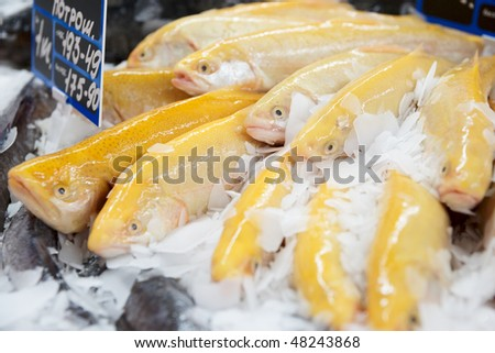 Yellow trout on fish market display, close-up - stock photo