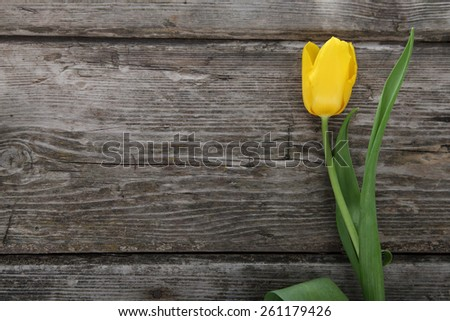 Yellow tulip on a wooden background . - stock photo