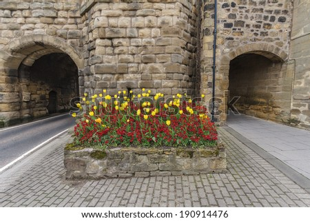 Yellow Tulips in front of Road and Walkway at the Entrance of Alnwick Town Wall - stock photo