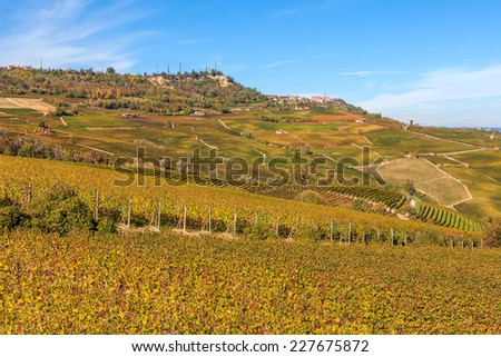 Yellow vineyards on the hills of Langhe in Piedmont, Northern Italy. - stock photo