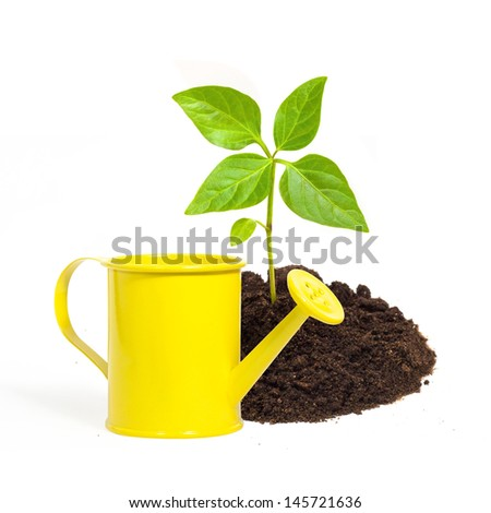 yellow watering can and a young green plant isolated on white background - stock photo