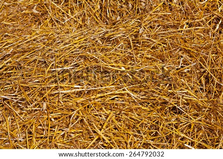 yellow wheat straw texture agricultural concept  - stock photo