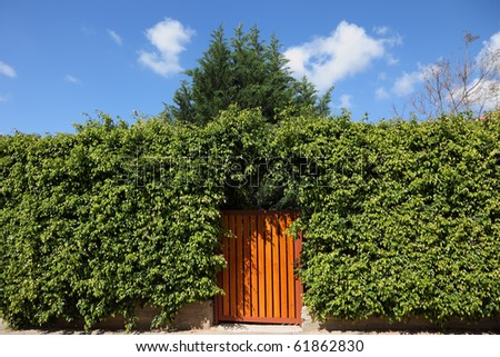 Yellow wooden gate, illuminated by the sun, in the high hedges - stock photo