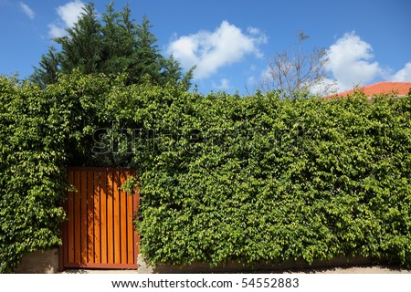Yellow wooden gate in the high hedges - stock photo