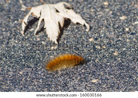 Are caterpillars poisonous yahoo dating