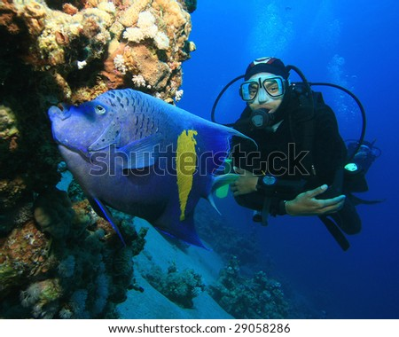 marine biology angel fish Coral caye missions belize home  this marine biology trip is an immersive learning opportunity in which you get to visit  lion fish control–create.