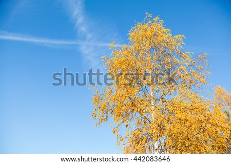 Yellowed leaves of birch on a background of blue sky in the morning - stock photo