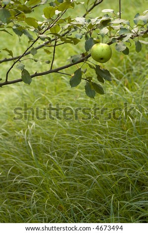 yellowish apple theme with space left for text - stock photo