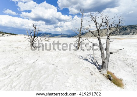 Yellowstone National Park - Dead tree trunks in travertines of hot spring - stock photo