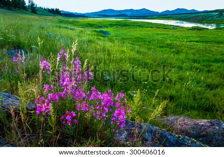 Yellowstone National Park Spring Flowers Landscape - stock photo