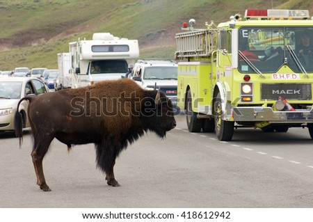 YELLOWSTONE, USA - AUGUST 18: bison on August 18, 2007 in Yellowstone: jam on the highway due to the presence of bison.