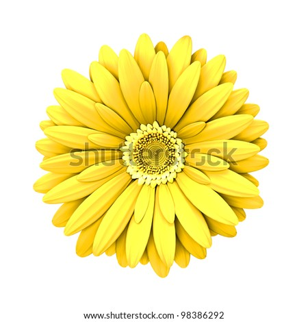 Yelow daisy flower isolated on white background - 3d render - stock photo