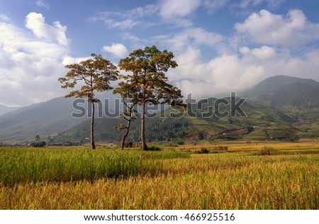 YEN BAI, Vietnam, August 12, 2015 landscapes, fields of grain, highland Yen Bai, Vietnam