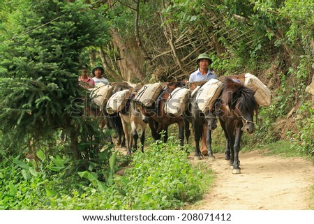 YEN BAI, VIETNAM - MAY 22, 2010: Unidentified Vietnamese men guiding horses to carry cement to their village to build new home in Mu Cang Chai district. Transportation is a serious matter here.
