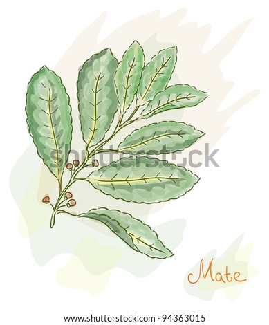 Yerba Mate. Watercolor style. Raster version. - stock photo