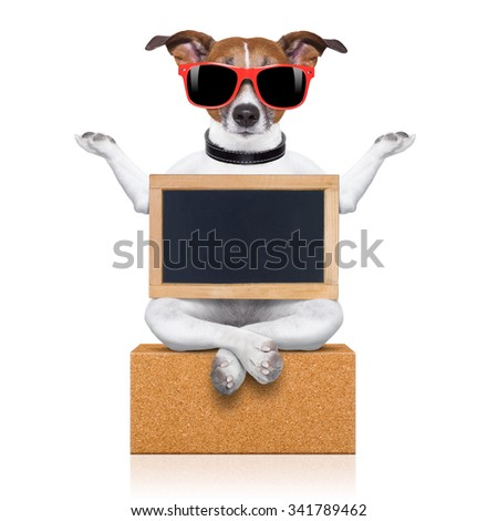 yoga dog   isolated on white background