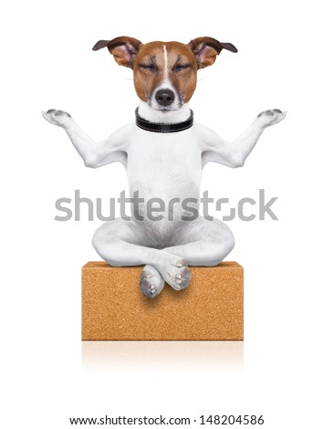 yoga dog sitting relaxed with closed eyes thinking deeply on a brick - stock photo