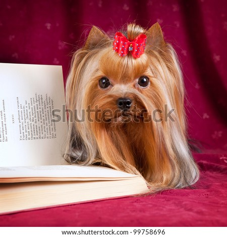 York and book on red background - stock photo