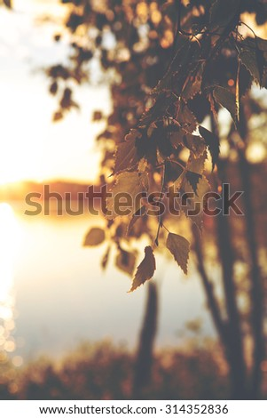 You can almost smell the summer. What a feeling. Image is about fresh birch leaves against the sunset. Image also has vintage effect to create some artistic angle in it. - stock photo