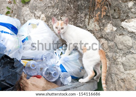 Young alley cat searching through some rubbish - stock photo
