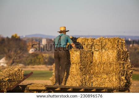 Young amish farmer stacking haybales on wagon in field at sunset. - stock photo