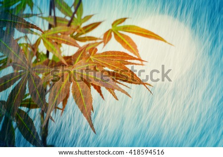 Young and beautiful Japanese maple tree with magic moon light and rain shower dreaming and fantasy atmosphere background - stock photo