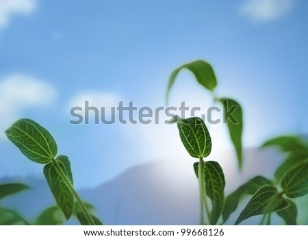 Young and  fresh bean sapling lit by sunlight with sun, sky and clouds in background - stock photo