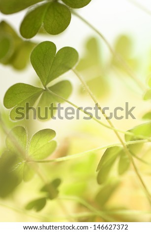 Young and fresh clover leaves backlit by sunlight - stock photo