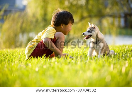 Young Asian boy playing with Alaskan Klee Kai puppy sitting on grass - stock photo