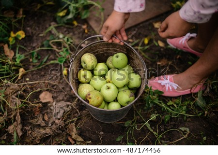 Young Attractive Woman on a Farm. Woman Farmer picking fruit from her organic garden. Agriculture: woman picking ripe apples in garden during fall.