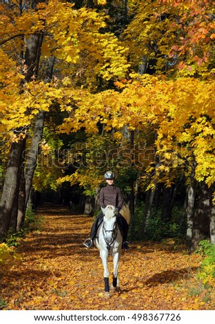 Young attractive woman riding her white arabian horse in the autumn forest