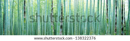 Young Bamboo forest, with some new bamboo shoots. - stock photo