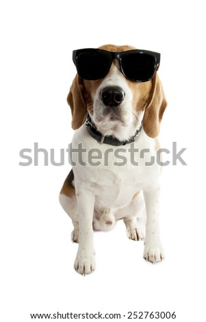Young beagle with sunglasses isolated over white - stock photo