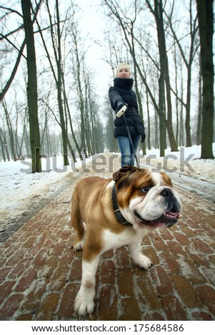 Young beautiful woman with an English bulldog for a walk in winter park - stock photo
