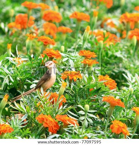 young bird in garden - stock photo