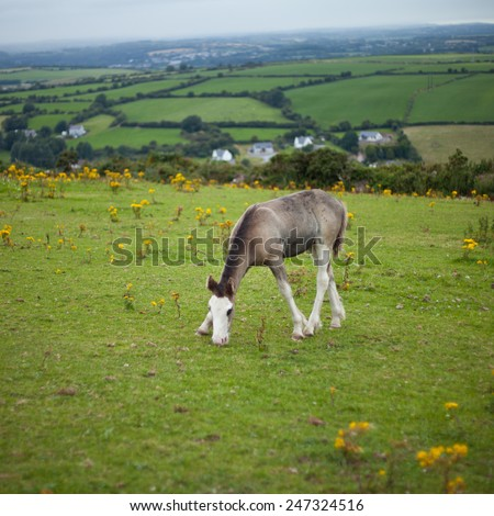 Young black and white horses on a meadow. Horse is resting on a green meadow. Summer time. Nature and animals. Nobody, country side, horsemanship, horse riding - stock photo