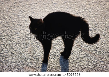 Young black cat with a shadow on the ice. action 3. - stock photo