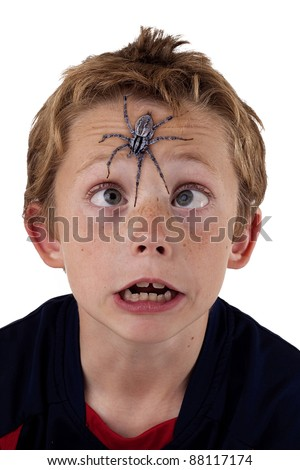 young boy cross eyed and terrified as he tries to see a giant wolf spider on his forehead - stock photo