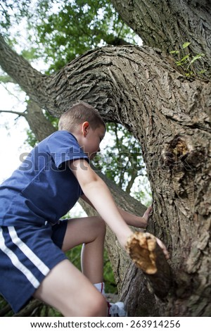 Young boy exploring a big tree in the summer
